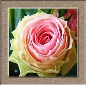 Semilla Semillas Rose Rare para su amante de la semilla arco iris flor de Rose - 50pcs