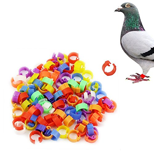 LING'S SHOP 100x Clip On Bird Leg Bands Rings 8mm for Pigeon Chicken Parrot Bantam Poultry Multicolor