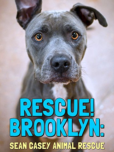 Rescue! Brooklyn ()