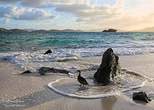 Beach Sunrise Photography- Early Bird, Sapphire Beach St Thomas USVI