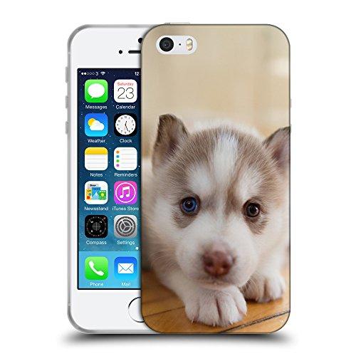 Super Galaxy Schutz Hülle TPU Case Schutzhülle Silikon Tasche Dünn Transparent // F00023900 Husky-Hund mit Bicolor Augen // Apple iPhone 5 5S 5G SE