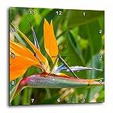 3dRose Danita Delimont - Flowers - Bird of Paradise, Strelitzia reginae, Kauai, Hawaii. - 13x13 Wall Clock (dpp_259220_2)