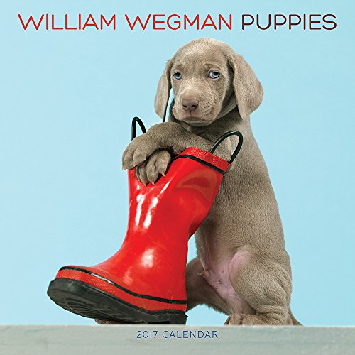 William Wegman Puppies 2017 Wall ()