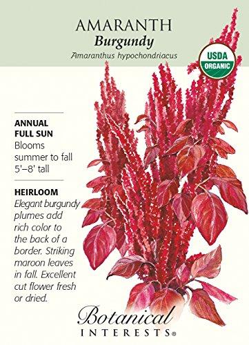 amazon com burgundy amaranth seeds 80 grams organic