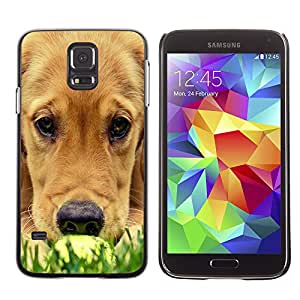 Vortex Accessory Carcasa Protectora Para SAMSUNG GALAXY S5 V G9000 - Labrador Golden Retriever Muzzle Grass Dog -