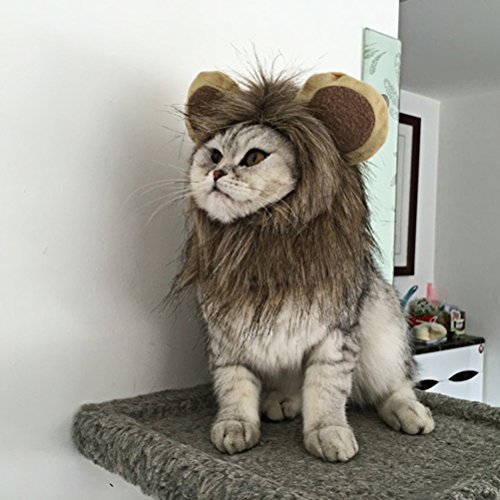 [Pet Cat Small Dog Lion Mane Wig Costume Hat for Dog Cat Festival Party Fancy Dress up with Ears] (Pet Panda Costume)