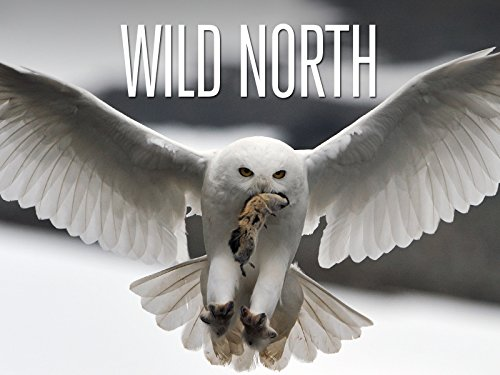 (Wild North - The Mountains)