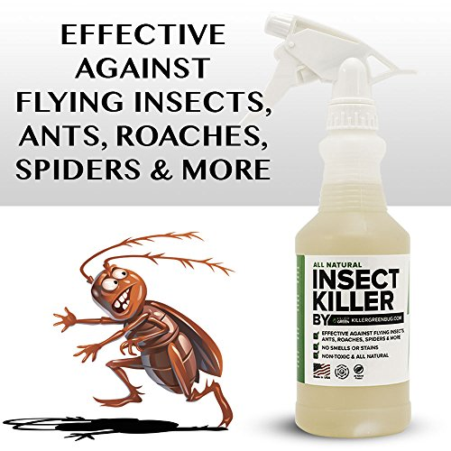 All Natural Non toxic Insect Killer Spray by Killer Green - 16 oz. - Kills on cockroaches, Ants, Mosquitos, Spiders. !00% Money Back Guarantee - Safe for People, Plants and Pets by Killer Green (Image #2)