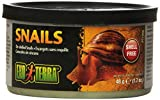Exo Terra Reptiles Canned Food, Unshelled Snails, 1.7-Ounce