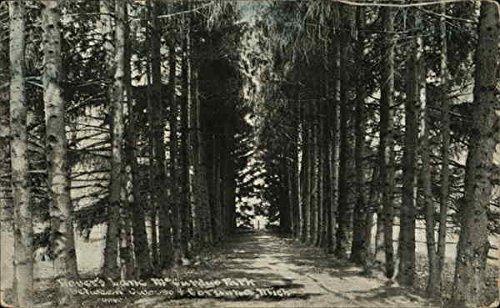 Amazon.com: Lovers Lane, McGurdys Park Corunna, Michigan ...