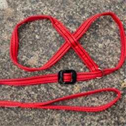 Gencon All-In-1 Clip To Collar - Dog Headcollar/Halter & Lead In One - Red/Black