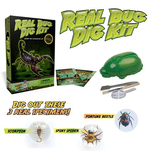 Real Insect Excavation Kit - Dig, Discover, and Collect 3 Real Bugs! ()