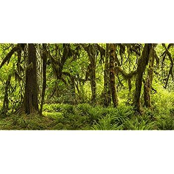 Amazon Com Aofoto 15x8ft Spring Rainforest Background