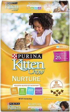 Buy kitten chow