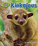 img - for Kinkajous (Jungle Babies of the Amazon Rain Forest) book / textbook / text book