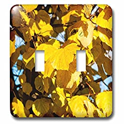 3dRose Alexis Photography - Seasons Autumn - Yellow linden tree leaves, play of light and shadow - Light Switch Covers - double toggle switch (lsp_272213_2)