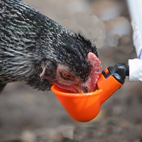 poultry-water-drinking-bird-coop-hen-feed-automatic-poultry-chicken-water-drinking-5pcs