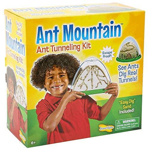 Buy ant farms