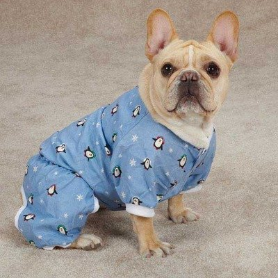 Casual Canine ZM3971 12 19 Blizzard Buddies Pajama for Dogs, Small, Blue
