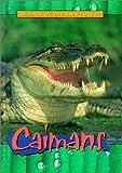 Caimans