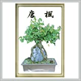 trident maple tree Bonsai Tree Trident Maple Seeds
