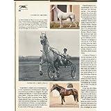 Grand livre du cheval en Russie (Le)