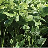 David's Garden Seeds Cover Crop Iron and Clay Open Pollinated D1125HJ (Green) One Ounce Package