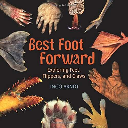 Best Foot Forward Exploring Flippers product image