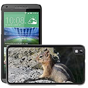 Hot Style Cell Phone PC Hard Case Cover // M00116984 Chipmunk Animal Wild Life Nature // HTC Desire 816