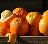 Navel Oranges - 7 lbs - Citrus From the Fruit Company