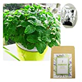 500+ Peppermint Seeds for Garden Planting, Non-GMO Organic Edible Green Mint Seeds
