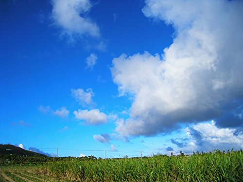 Home Comforts Laminated Poster Cloud Dynamic Sugar Cane Field Blue Sky Green Poster 24x16 Adhesive Decal
