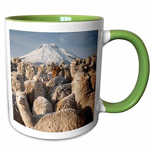 3dRose Danita Delimont - Wildlife - Alpacas, Cotopaxi Volcano, National Park, Ecuador - SA07 POX2245 - Pete Oxford - 15oz Two-Tone Green Mug (mug_141176_12) (Oxford Volcano)
