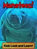 Manatees! Learn About Manatees and Enjoy Colorful Pictures - Look and Learn! (50+ Photos of Manatees)