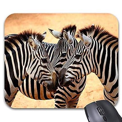5435eba499a11 Amazon.com : Zebra Wild Cute Animals Mouse Pads 11.87 x 9.86 ...