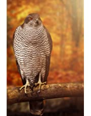Bird Of Prey: Notebook, 150 lined pages, softcover, 6 x 9