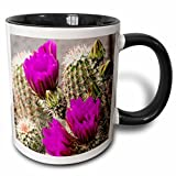 3dRose USA, Arizona, Tucson, Arizona-Sonoran Desert Museum, hedgehog cactus. - Two Tone Black Mug, 11oz (mug_190453_4), 11 oz, Black/White