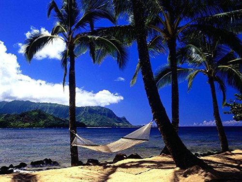 アートシルクファブリック布ロールポスター – Hammock Palm Trees Coast Beach – (サイズ: 28 x 20インチ) B075VW5PYF