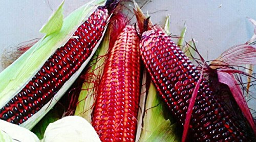 Hot Sale! 50Pcs Siam Ruby Queen Hybrid Sweet Corn Seeds Thailand Vegetable Plants Super Sweet Taste Delicious Hybrid Yummy Red Sweet Corns Organic Seeds