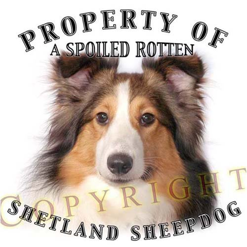 Shetland Sheepdog Sheltie SABLE Property Of Adult Long Sleeve T Shirt - 3XL