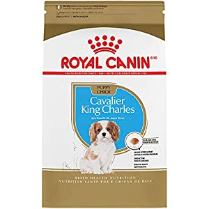 Royal Canin Breed Health Nutrition Cavalier King Charles Puppy Dry Dog Food 49