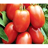 Glamaours Tomato Seeds, Early Roma Tomato Italian Heirloom - 2000 Seeds Open Pollinated