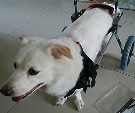 Silla De Ruedas Para Perros - Talla S Para Altura De 38 - 43 Centimetros ...: Amazon.es: Productos para mascotas