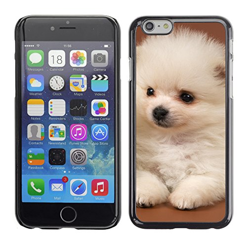 "Premio Sottile Slim Cassa Custodia Case Cover Shell // V00003728 chiots pomeranian // Apple iPhone 6 6S 6G PLUS 5.5"""