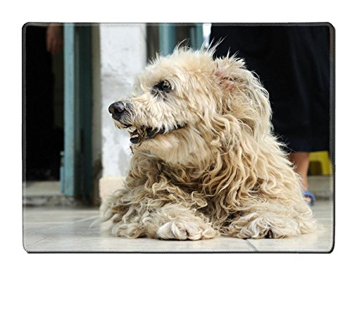 Luxlady Natural Rubber Placemat IMAGE ID: 26915769 Dirty dog