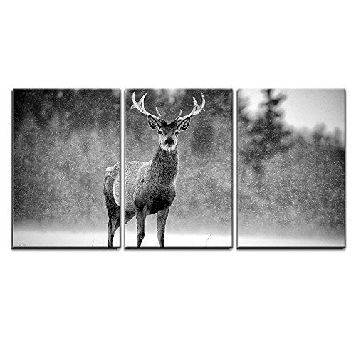 Red Deer Stag Cervus Elaphus in The Scottish Winter Snow Black White Image x3 Panels