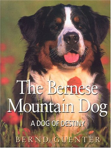 Industries Doral (The Bernese Mountain Dog: A Dog of Destiny)