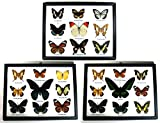 3 x Framed Wall Decor Real Beautiful Butterfly Display Insect Taxidermy Gift #03