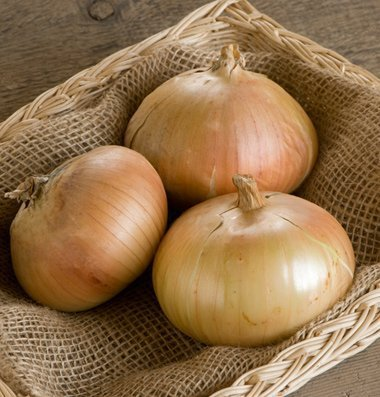 David's Garden Seeds Onion Bridger D2545 (Yellow) 200 Hybrid Seeds