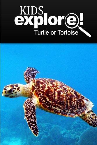 Download Turtle Or Tortoise - Kids Explore: Animal books nonfiction - books ages 5-6 pdf epub